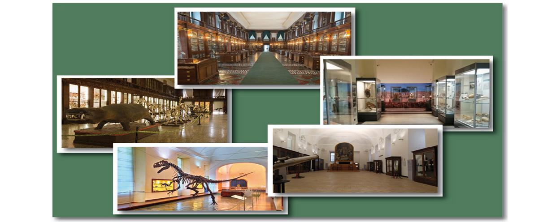 Visita i musei del Centro Musei delle Scienze Naturali e Fisiche di Napoli