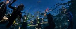Visita Verdeacqua Onlus - Istituto per gli Studi sul Mare