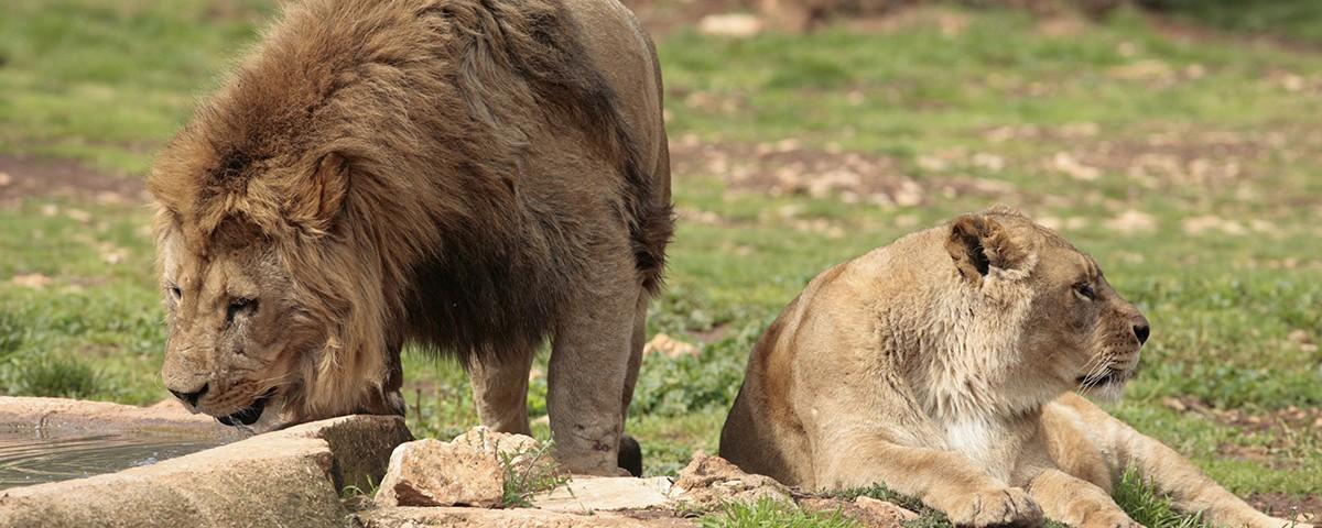 Visita lo Zoosafari Fasano