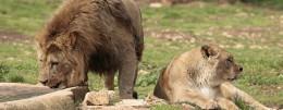 Visita lo Zoosafari Fasano - Brindisi