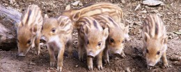 Visita il Parc Animalier d'Introd