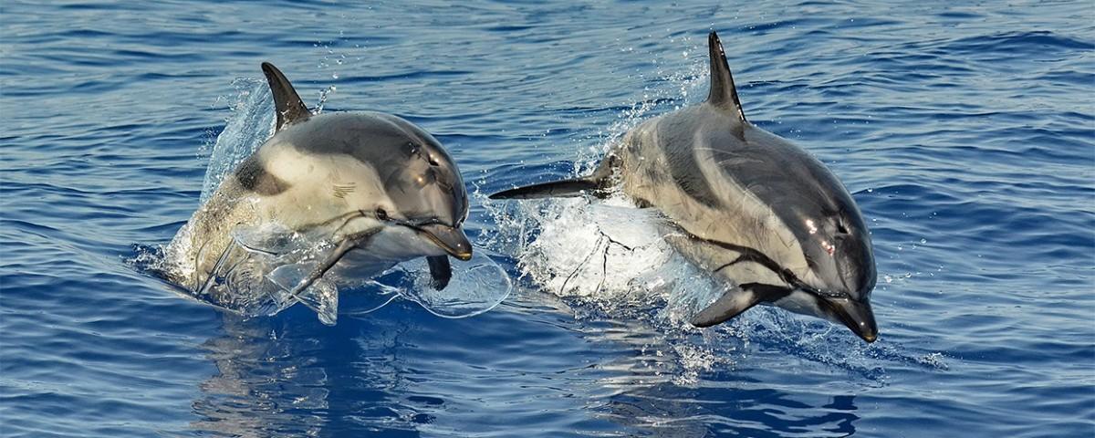 Avvistamento cetacei in Liguria con biologi a bordo - Genova