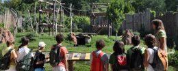 Parco Natura Viva - Didattica online sulla Natura