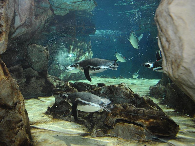 Visita l'Acquario di Genova