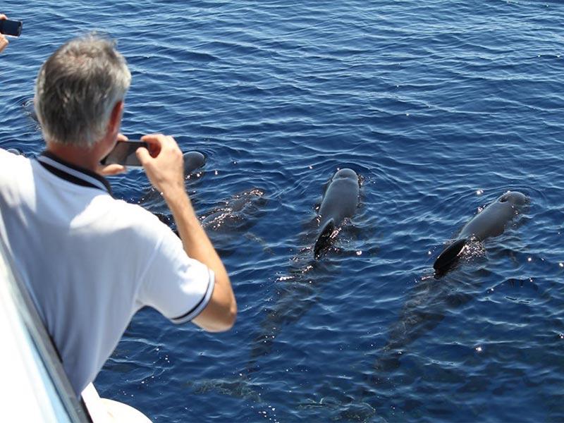 Escursione naturalistica di avvistamento cetacei in Liguria, con biologi a bordo