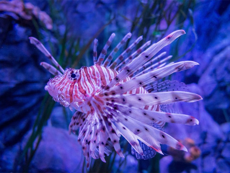 Visita Gardaland SEA LIFE Aquarium - Verona