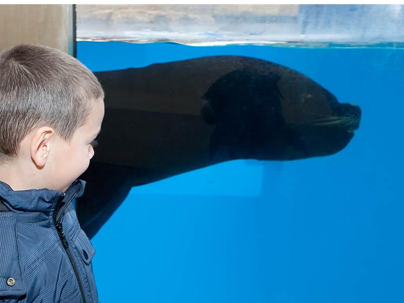 Visita Gardaland SEA LIFE Aquarium