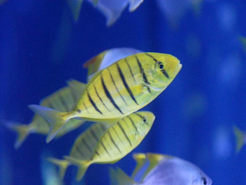 Gardaland SEA LIFE Aquarium - Didatour - Gite scolastiche e viaggi di ...