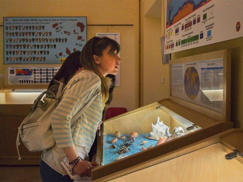 Visita il Museo Malacologico Malakos