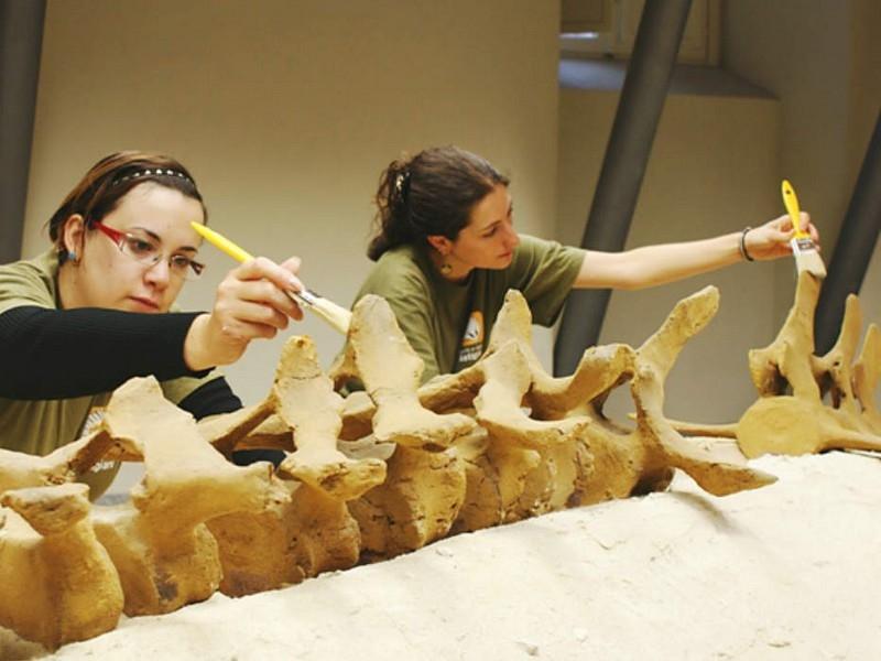 Visita il Parco Paleontologico Astigiano