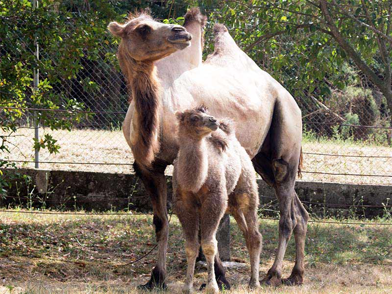 Parco Zoo Falconara - Natura lezione dal web - Ancona