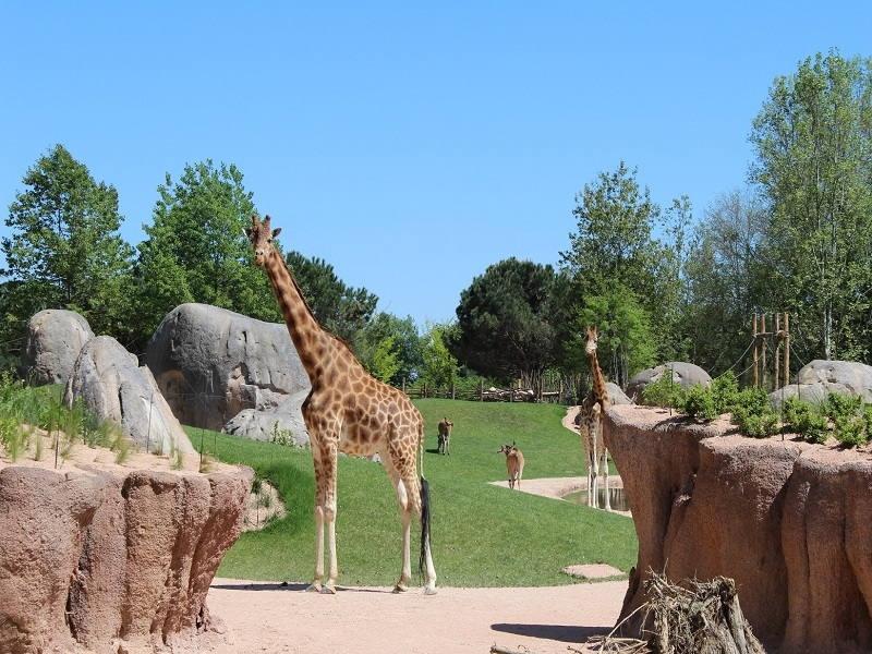 Visita il bioparco Zoom Torino