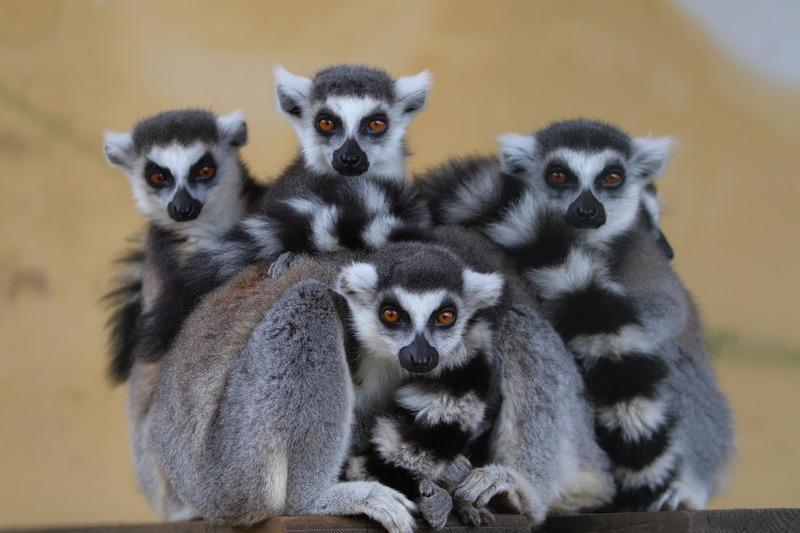 Gita scolastica allo Zoosafari di Brindisi